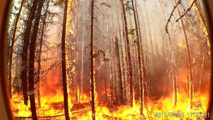 RS Composite Utility Pole Survives Forest Fire